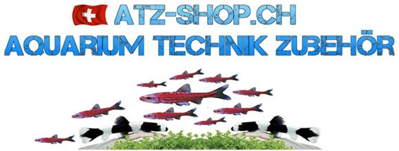 Aquarium Fische kaufen